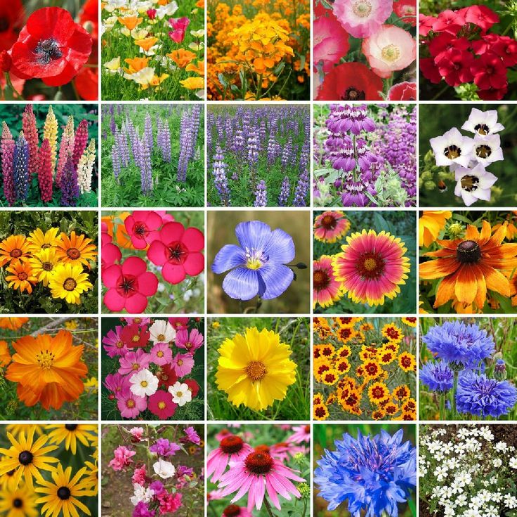 Our Southwest Wildflower Mix contains a rich blend of 24 annual and perennial favorites ideally suited for the Southwestern states with the most arid conditions.  Plant in spring, summer, or fall in a sunny spot with proper drainage.