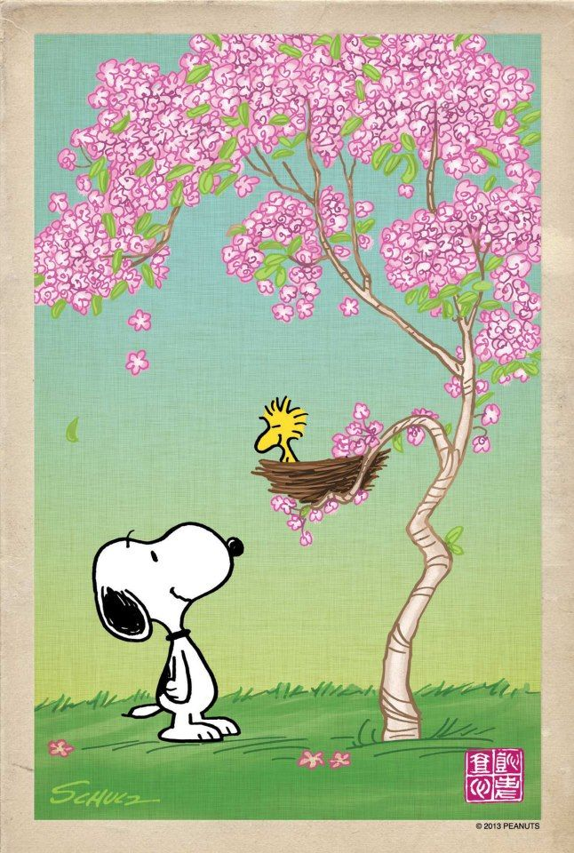 Charlie Brown ~ It's spring & Woodstock is in the cherry blossoms ♥