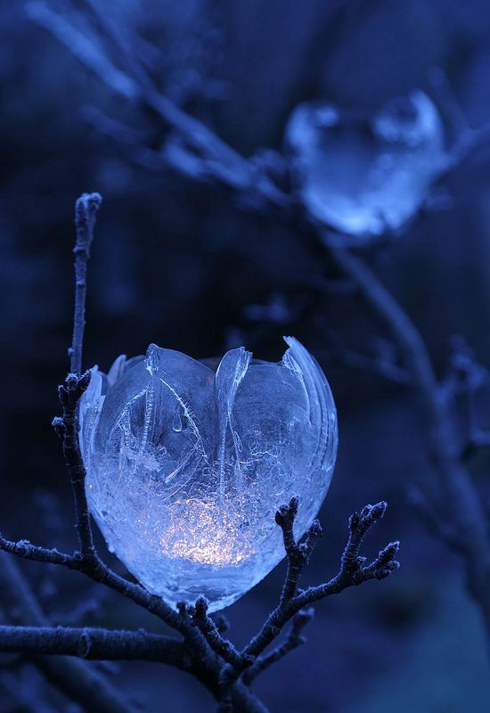 afairyheart:  Apple Tree Ice Lights by Mike Bolam