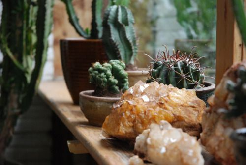 Green room, cacti, cactus, brick wall, stones, crystals, orange calcite