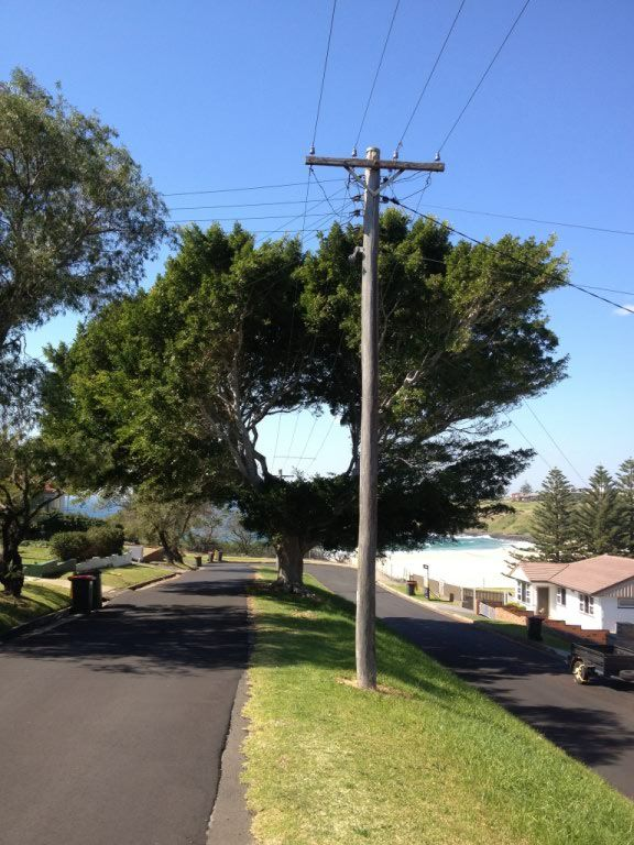 tree's reaction to powerlines