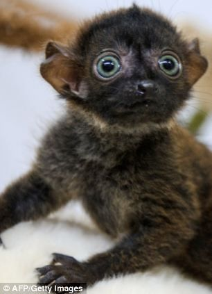 17 Best images about Lemur on Pinterest | Madagascar, Zen ...