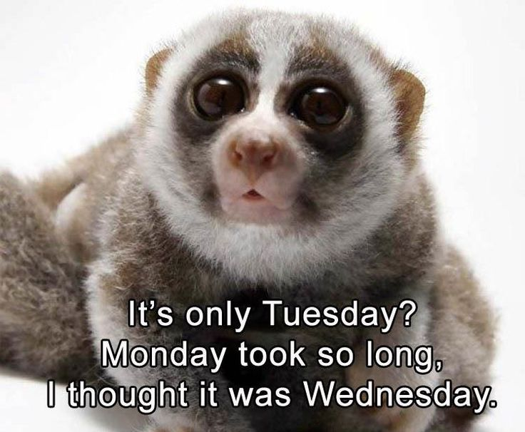 Funny Meme For Tuesday : Best funny days images hilarious quotes