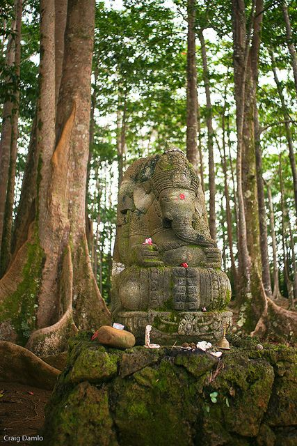 Ganesha and the Sacred Trees in Wailua, Hawaii. Photography by Craig Damlo.