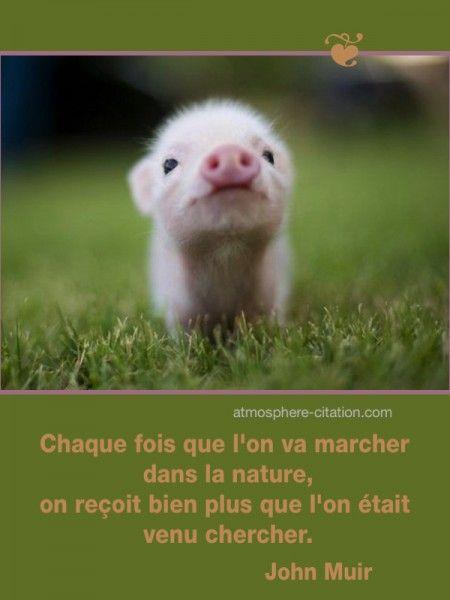Chaque fois que l'on va marcher dans la nature,  Trouvez encore plus de citations et de dictons sur: http://www.atmosphere-citation.com/animaux/chaque-fois-que-lon-va-marcher-dans-la-nature.html?