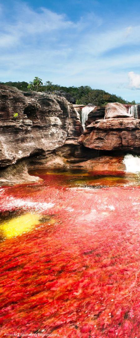 Caño Cristales River -Liquid Rainbow, River of Five Colours-  La Macarena, Meta | Colombia