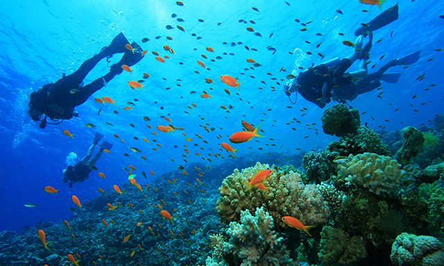 Experience a PADI recognized SCUBA diving course in a safe and supervised environment while visiting Bermuda #CelebrityCruises #CelebrityShoreExcursions