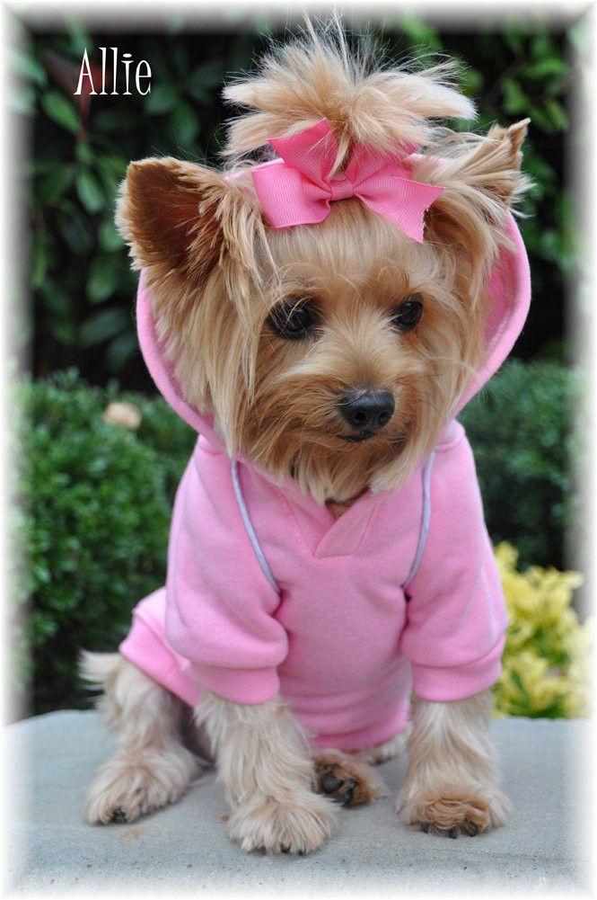 145 Best Images About Yorkies Pomeranians On Pinterest
