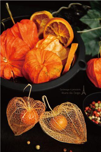 Chinese lantern plant   M&M Creative Works 【Photo styling】