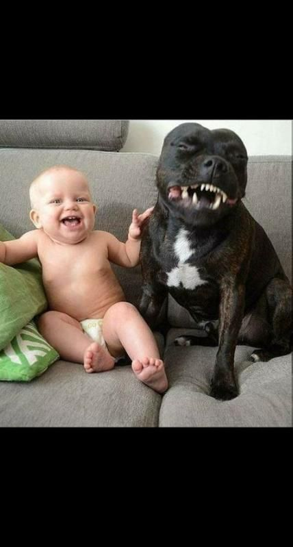 Funny animals for kids hilarious so cute 34  ideas