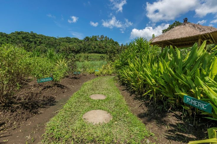 Organic Garden at Alila Manggis in East Bali