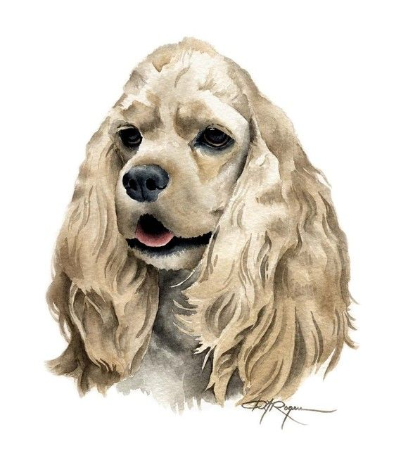 COCKER SPANIEL Dog Art Print Signed by Artist DJ by k9artgallery, $12.50