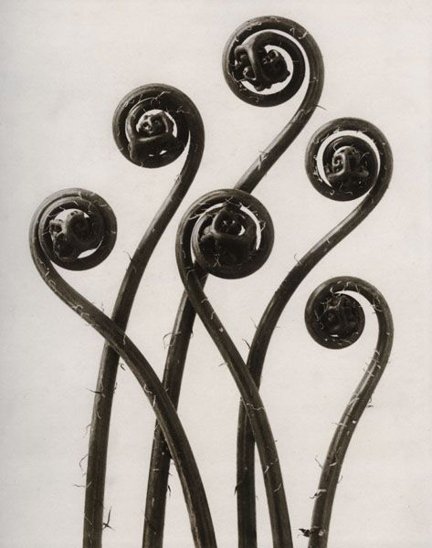*Karl Blossfedlt - These photographs make me happy.  They play on the idea of whimsical.  The close ups of the plants make see new things and question if they're indeed plants.