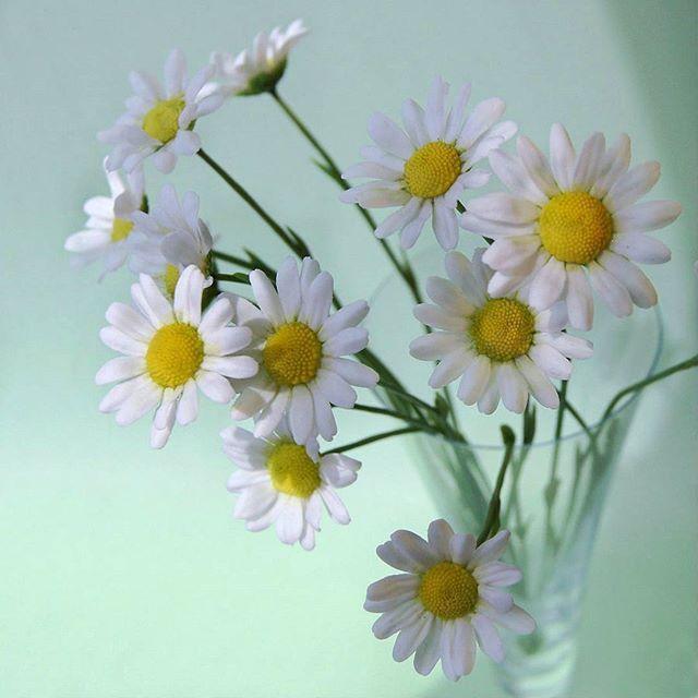 Доброе ромашковое утро!Удача в каждом цветочке!!! Цветы из флористической полимерной глины. #ТатьянаПянзина #керамическаяфлористика  #ромашки #декор #интерьер #длядома #цветыизглины #ceramicflowers #polymerclay #handmade