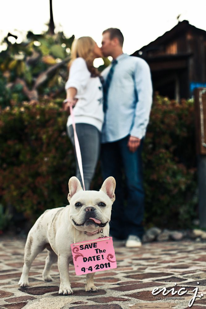 Even pets can help out in a cute #wedding proposal! #SheSaidYes #engaged #pets