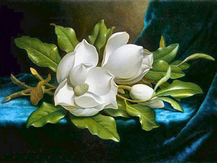 magnolias flores - Buscar con Google