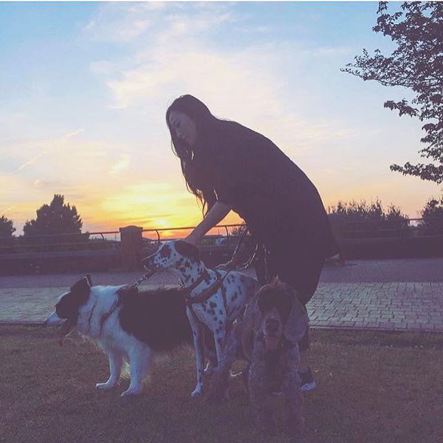 病み上がりからの この3頭はキツかった😷 . . .  でも日がのびてくれて助かるー🌤✨ . . . . #咳が止まらない #酵素風呂予約した #やっぱり5月は体調悪くなる  #englishcockerspaniel  #dalmatian #bordercollie  #イングリッシュコッカースパニエル  #ダルメシアン#ボーダーコリー #愛犬#犬#お散歩#夕日
