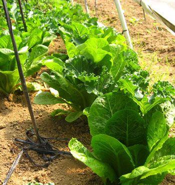 Bali Rungu Organic Farm Gede Green