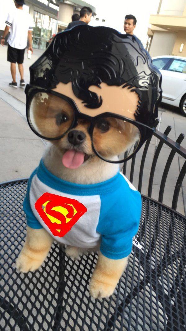 Good Pom Canine Adorable Dog - 0a80bdd446fdd9c8c8321536a19c1a9a--cutest-animals-funny-animals  Pictures_461965  .jpg