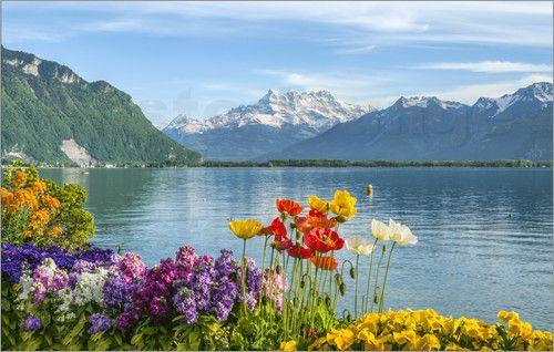 Olaf Protze - Genfer See im Fruehling, Schweiz