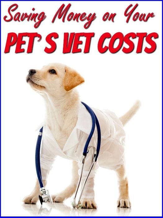 Saving Money On Your Puppy S Vet Costs Pets Labrador Puppy Training