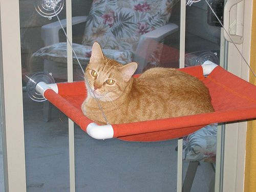 Just Cats: Little Emma U0026 Window Seats// This Is A Cute Idea For Your Cat  They Love High Up Places And They Can See A Great View To The Outside | Cat  ...