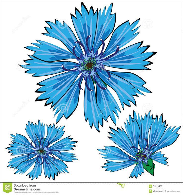 Cornflower Stock Illustrations – 821 Cornflower Stock ...
