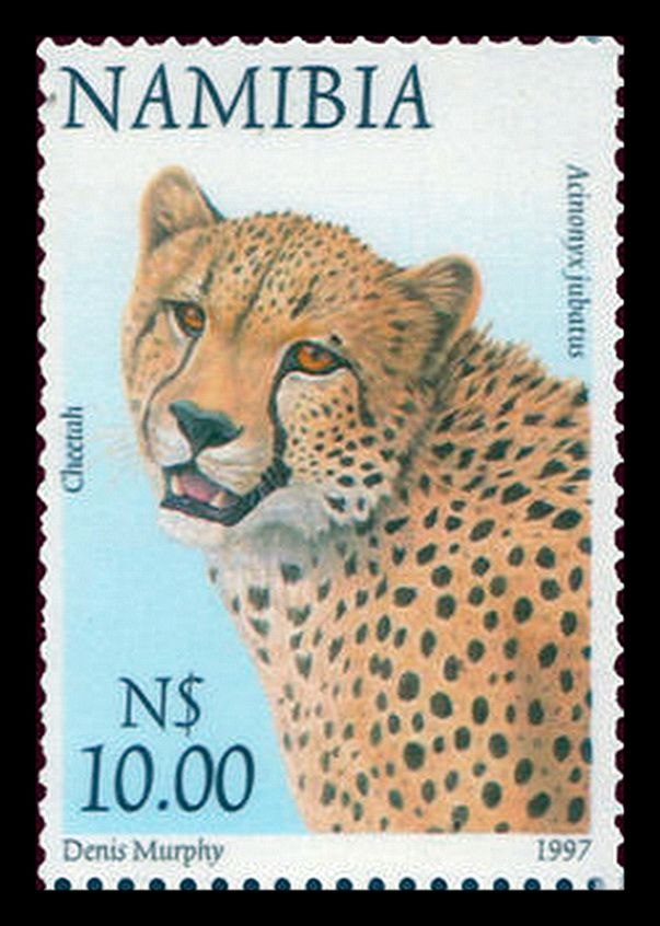Africa Map Horn Of Africa%0A Namibia      Animal definitive     Cheetah  Acinonyx jubatus   Stamp  CollectingWest AfricaBig