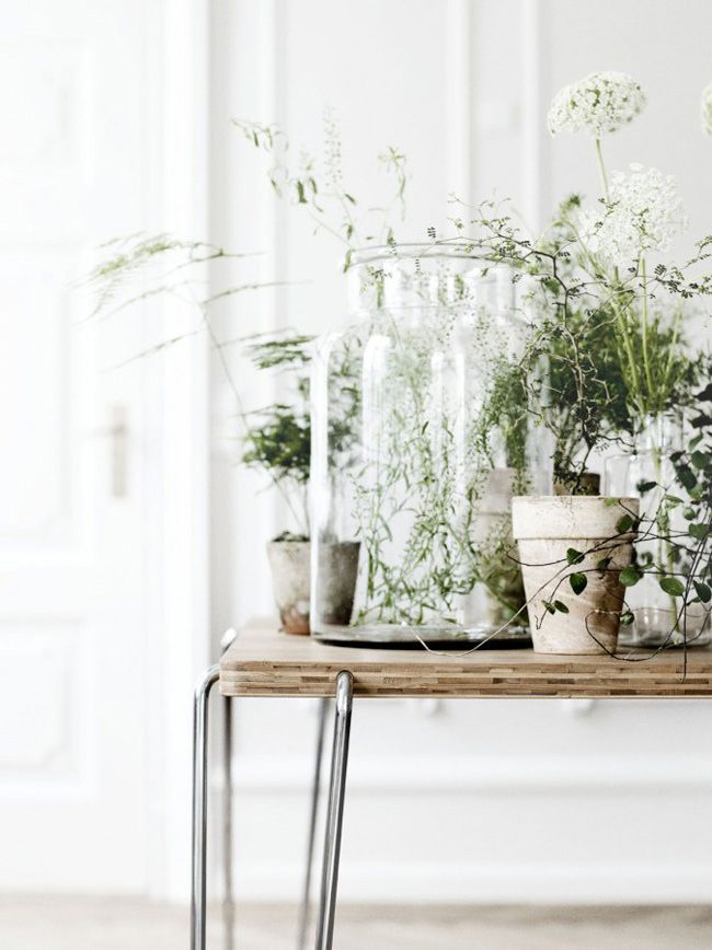 Bloesemliving_flowers-plant