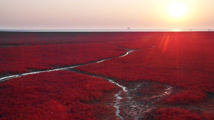 Červená pláž v Číne.