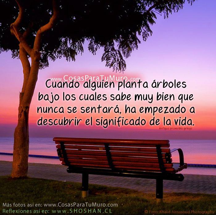 Reflexiones frases par bolas de la vida posts and frases - Cuando se plantan los arboles frutales ...