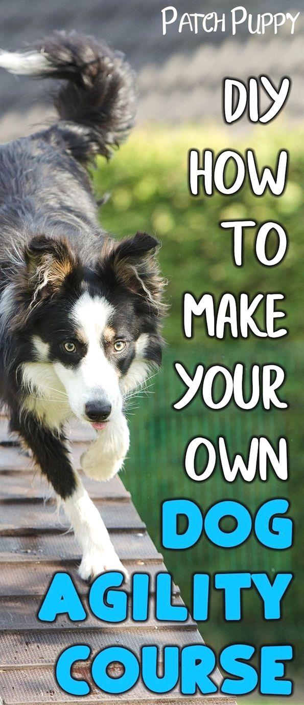 Dog Training Academy Dog Training Mats For Furniture Dog
