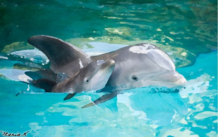 A extra detailed painting of two cute dolphins (You would have probably seen a photo like this on the internet), mostly painted with watercolor paint, signed by me (Maria K)