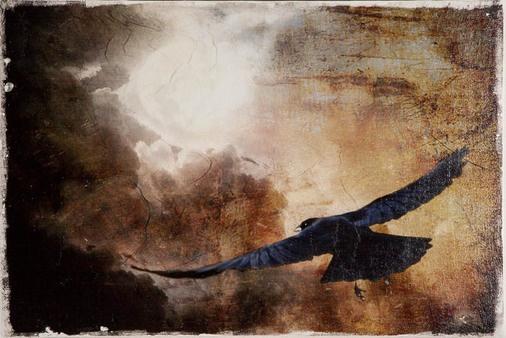 Black Icarus - Craig Bell