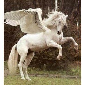 Pegasus Things that I love