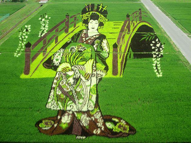 田んぼアート 花魁(梅沢富美男)- Rice Paddy Art - Oiran