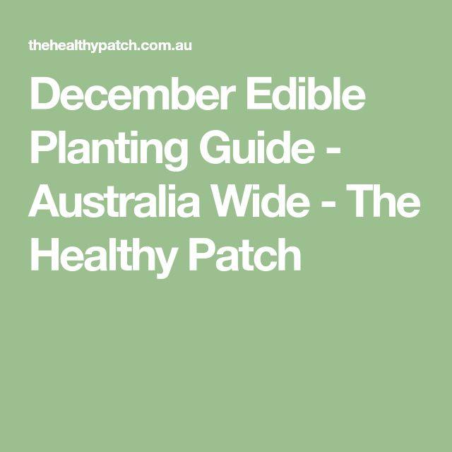 December Edible Planting Guide - Australia Wide - The Healthy Patch
