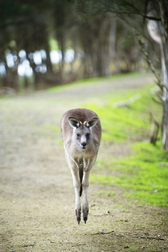a guide to kangaroo island, south australia, with kids -    click photo for more