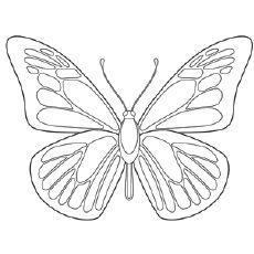 22 best coloring images on Pinterest Butterflies