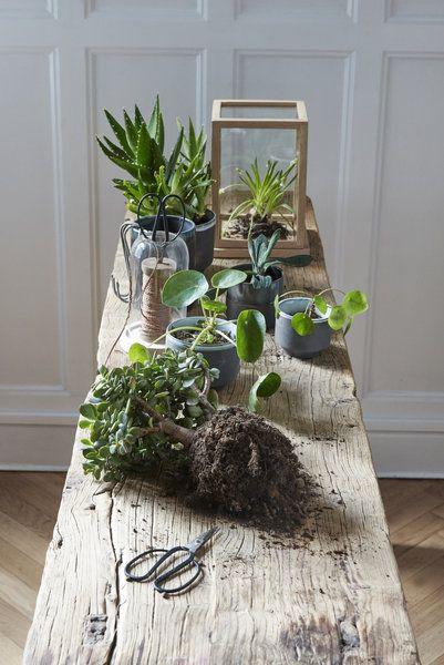 542 besten \WOHNEN Bilder auf Pinterest Zimmerpflanzen - einrichtung mit exotischer deko altbau