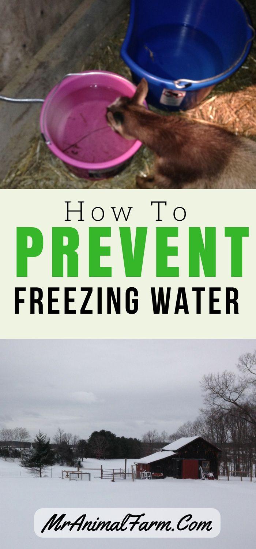 winter homesteading advice