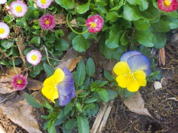 Heartsies and daisies