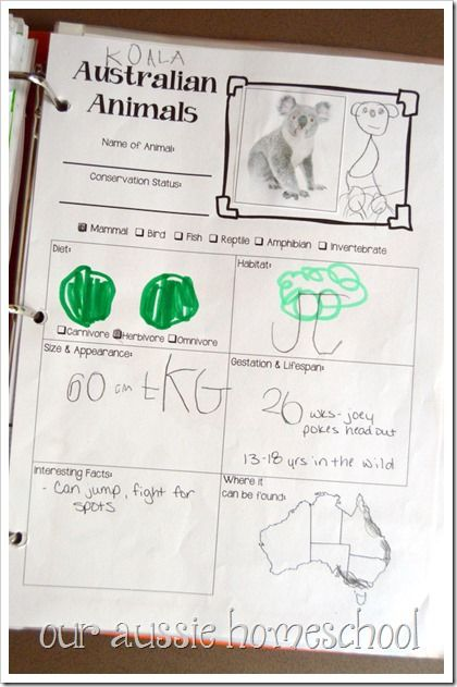 Best Science Notebooking Images On   Frugal