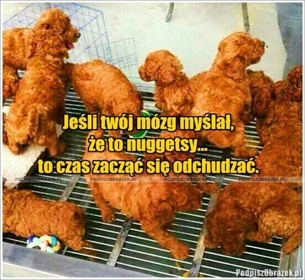 Nuggetsy? :) Jeśli twój mózg myślał, że to nuggetsy to czas zacząć się odchudzać... - śmieszne fotki i obrazki na Podpiszobrazek.pl