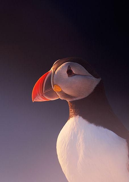Kuvia | Finnature – Lintukuvaus, luontokuvaus, matkat ja kurssit