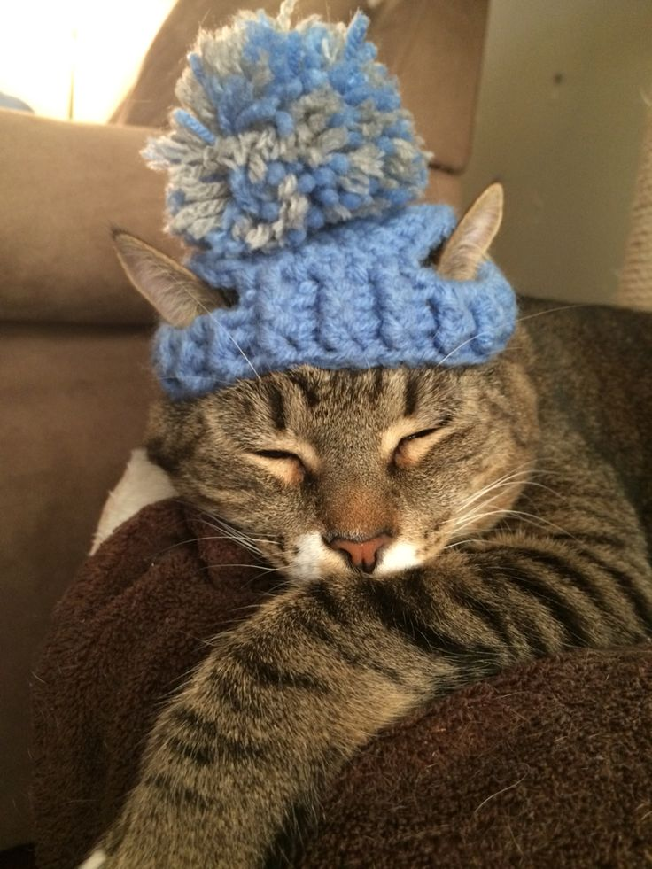 This is a hat I made for my sister's cat using this pattern. He's a 3 year old, 15 lbs cat. I added the pom pom.
