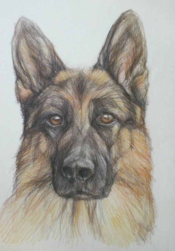 German Shepherd Pencil Drawing Giclee Print by PETARTPortraits, $25.00