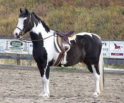 193 best images about beauties on pinterest mustang horses ponies and appaloosa horses. Black Bedroom Furniture Sets. Home Design Ideas