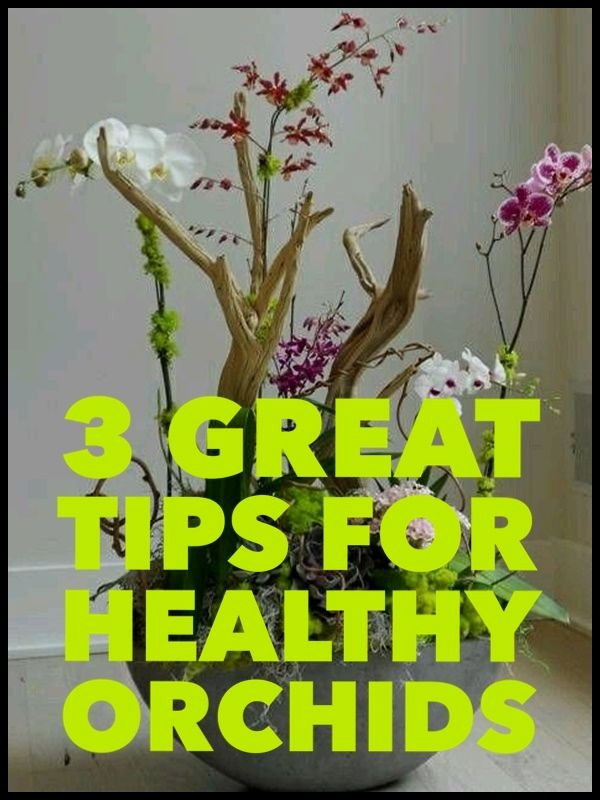 how to grow orchids gardening orchids growing orchids orchid rh pinterest com