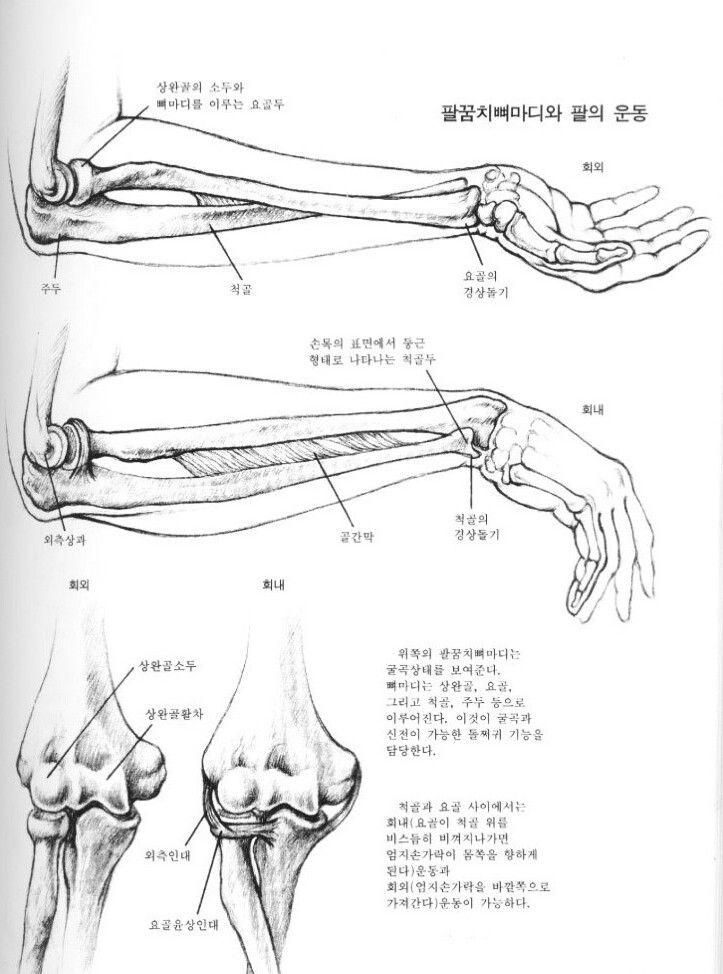 팔의 운동